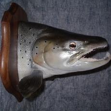 truite poisson
