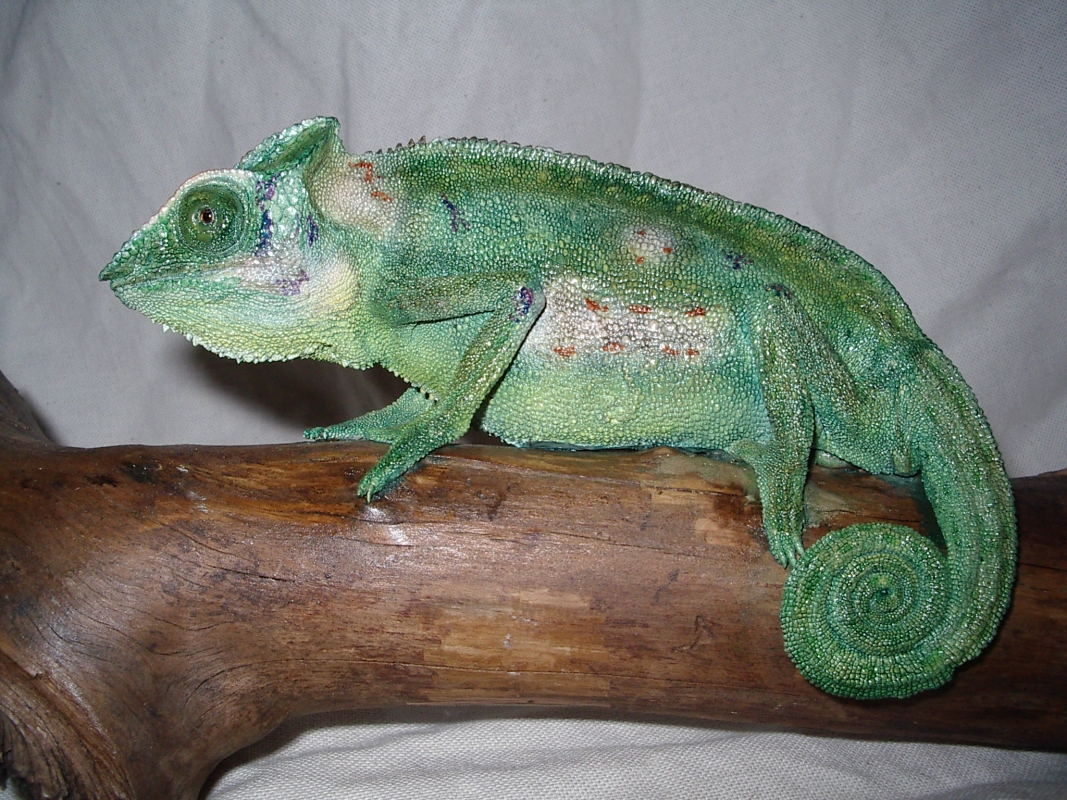 taxidermiste jouzeau