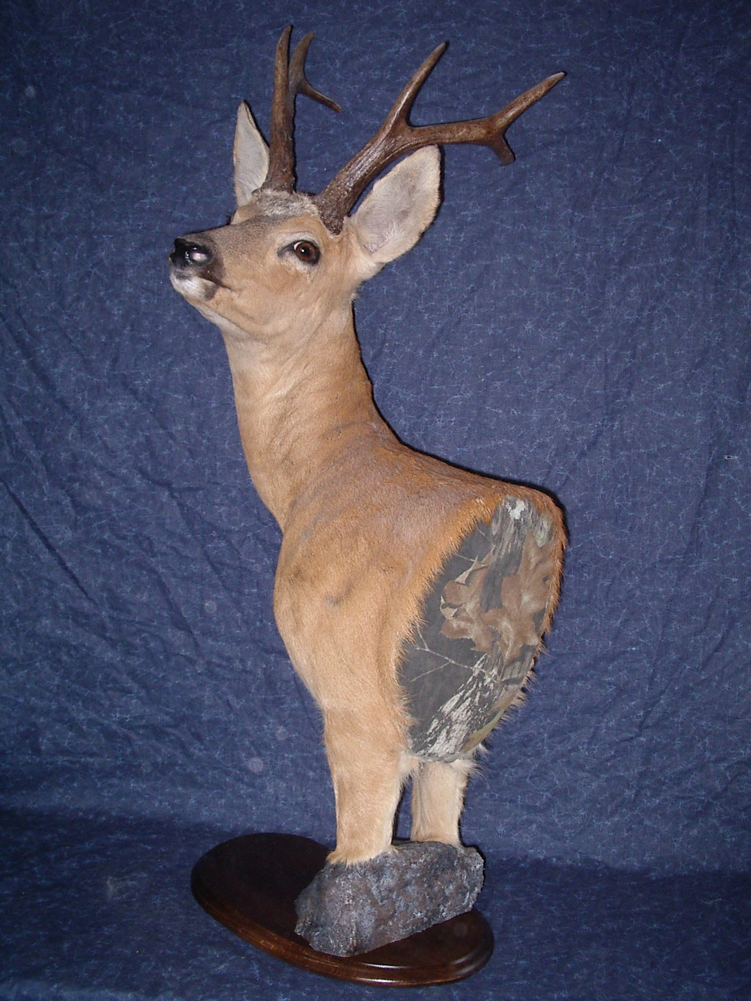 taxidermie herault