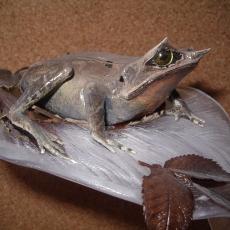 grenouille oiseaux